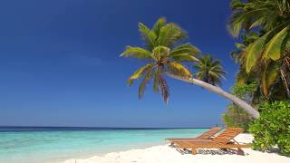 ☀ Beach Ambience on Tropical Paradise Island (Maldives) ☀ Calm Ocean Sounds for Relaxing & Sleeping