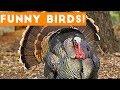 Funny Turkey & Bird Videos Weekly Compilation 2017 | Funny Pet Videos