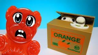 Mystische Katze in einer Box des Lucky Bär