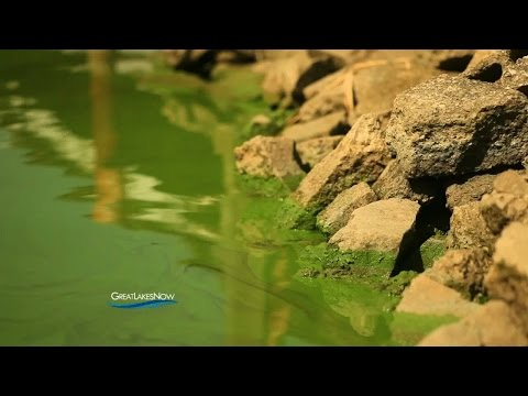 Great Lakes Now: The Algae Crisis