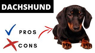 Dachshund Pros And Cons | The Good AND The Bad!!