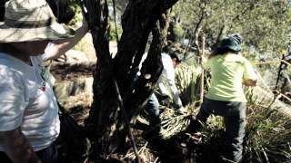 Landcare Australia Corporate Volunteering and Workplace Giving Programs
