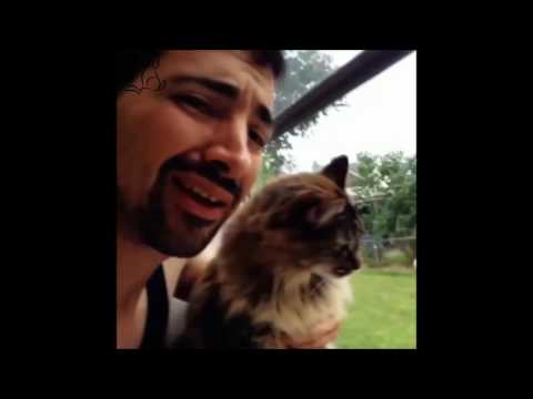 Funny Cat Vines Best Of Cat Videos Compilation NEW