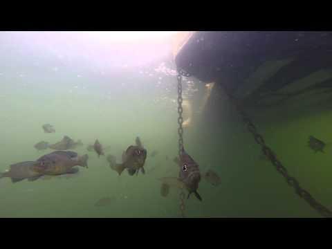 The GoPro HERO 3+ Underwater In Lake Calhoun - Minneapolis 2014