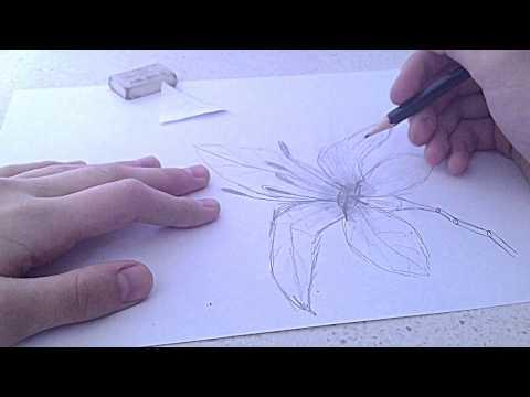Как рисовать лилии