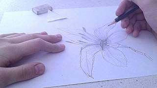 как нарисовать лилию(Это видео создано с помощью видеоредактора YouTube (http://www.youtube.com/editor), 2015-04-08T16:27:23.000Z)