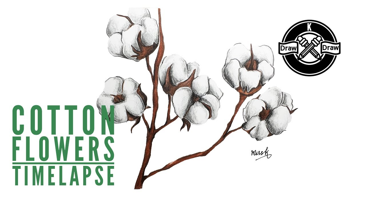 Drawing Cotton Flowers Timelapse Youtube