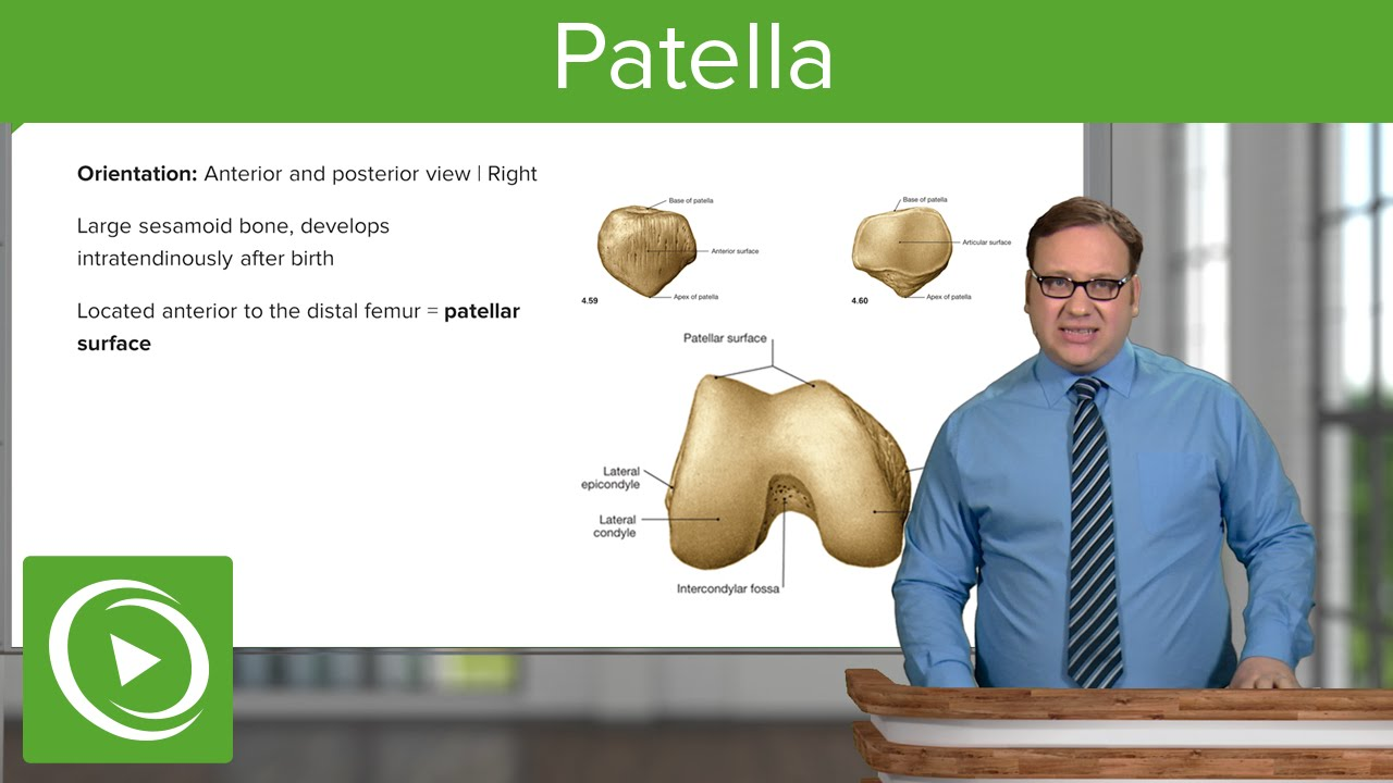 Patella: Views, Location & Features – Anatomy | Lecturio