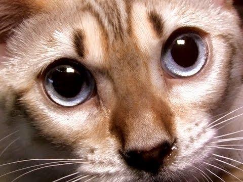 Продажа котят днепр. В сервисе объявлений olx. Ua днепр можно быстро и недорого купить кота или кошку. Заведи котенка прямо сейчас!