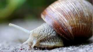True facts about the kinkiest animal in the world... the land snail...