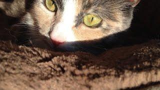 Мася смотрит передачу про кошек