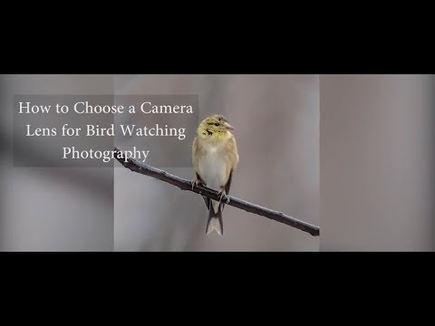 How To Choose Right Lens For Bird Watching Photography