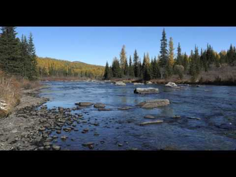 4K UHD Long Duration  Scenery Small River in the Wild Forest in Autumn