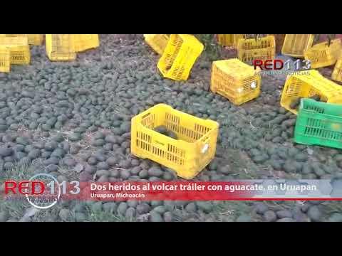 VIDEO Dos heridos al volcar tráiler con aguacate, en Uruapan