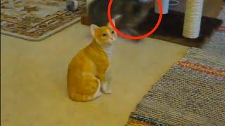 Schaut euch an, wie dieses arme Kätzchen verzweifelt nach Aufmerksamkeit sucht.