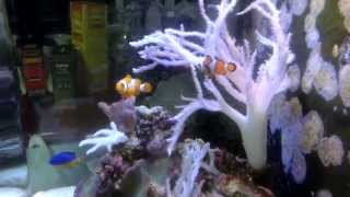видео Морской аквариум в Киеве