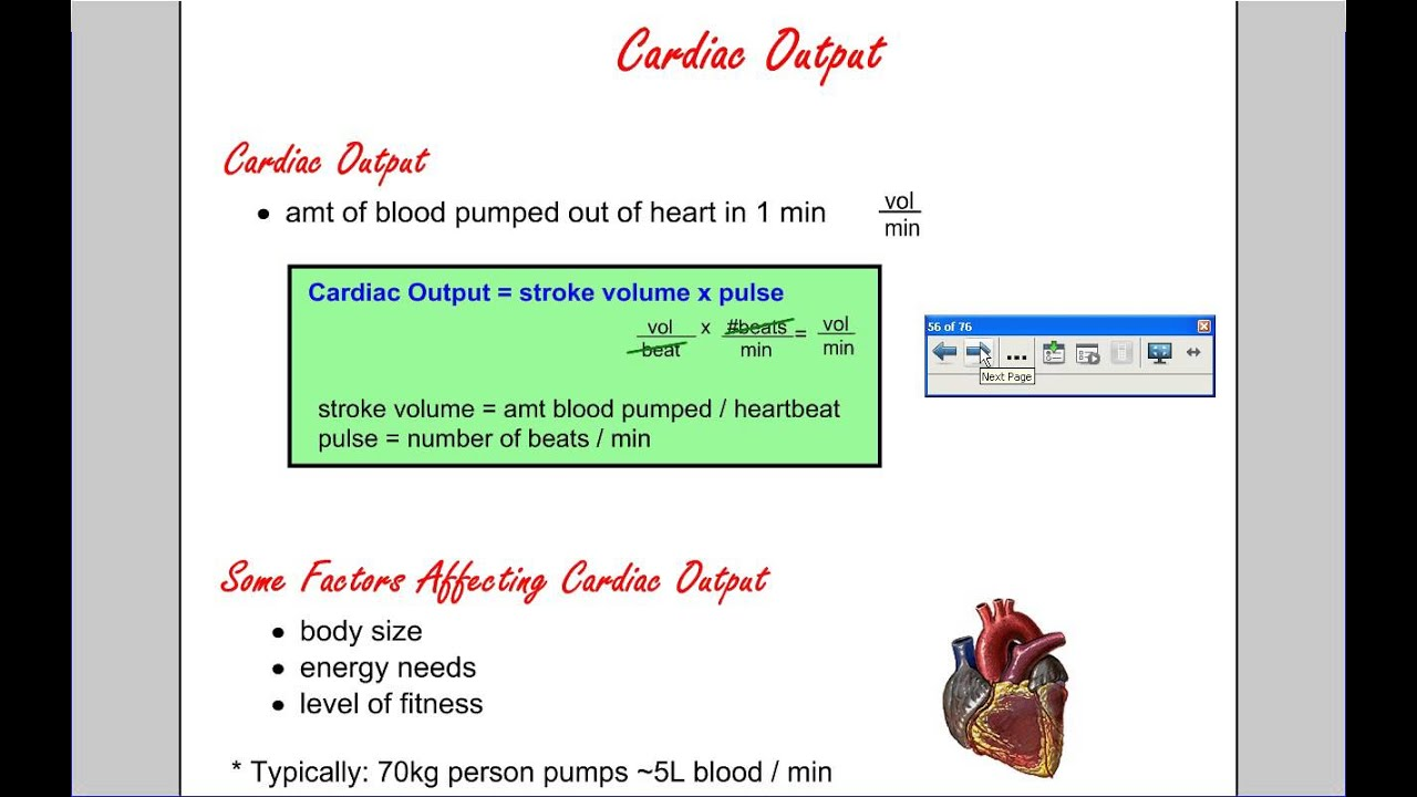 cardiac output and blood pressure relationship to heart