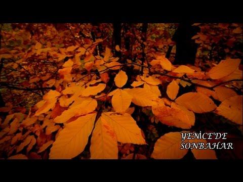 Yenice Ormanlarında Sonbahar