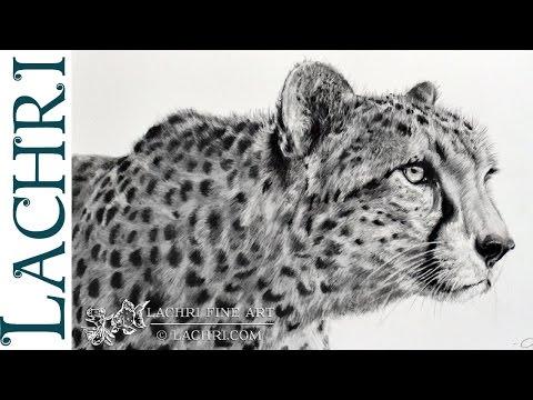 Graphite Cheetah speed drawing w/ Lachri