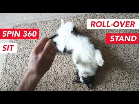 Cat Tricks!!