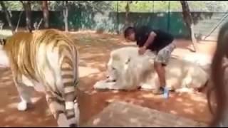 Уход за животными.