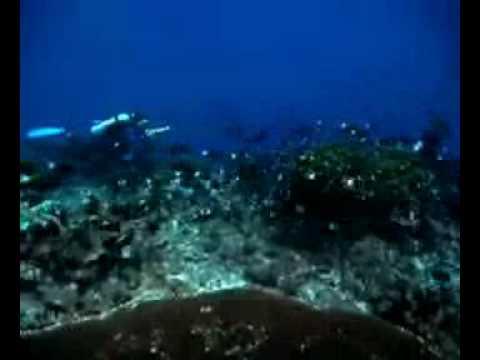 Phoenix Islands Coral Reefs