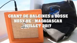 Les Baleines chantent ! Nosy Be, Madagascar_Les Baleines Rand'eau