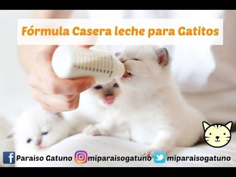 fórmula casera de leche para gatitos (3 ingredientes) - youtube