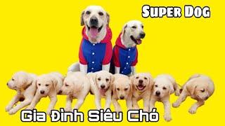 Ngày 50 | Sự điên cuồng của Kim Chi đã làm cún con Chút Chít sợ hãi