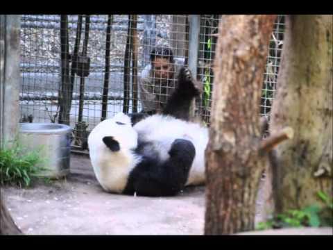 San Diego Zoo ~ 4.11.2014 ~ Gao Gao