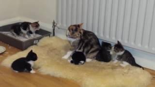 Вызов ветеринара на дом(, 2017-01-24T22:09:39.000Z)