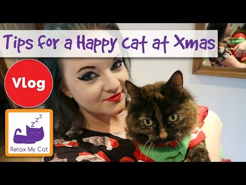 5 Tips to Have a Happy Cat this Holiday! Keep Your Cat Safe and Happy at Christmas!