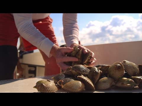 Florida Travel: How to Go Scalloping in Florida: A Guide