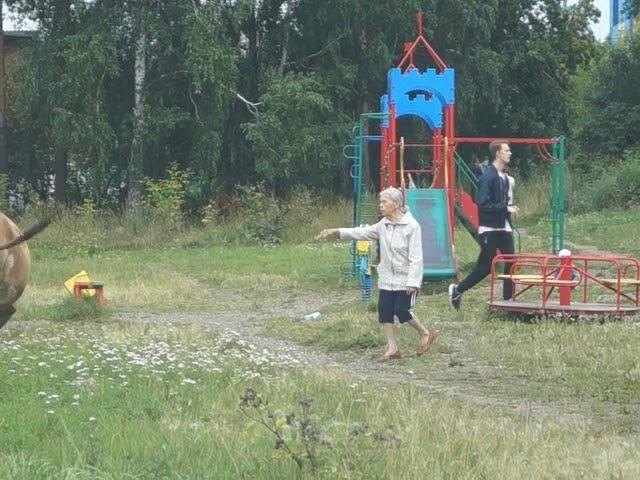 Как на деле работает борьба с бродячими коровами в Дивногорске