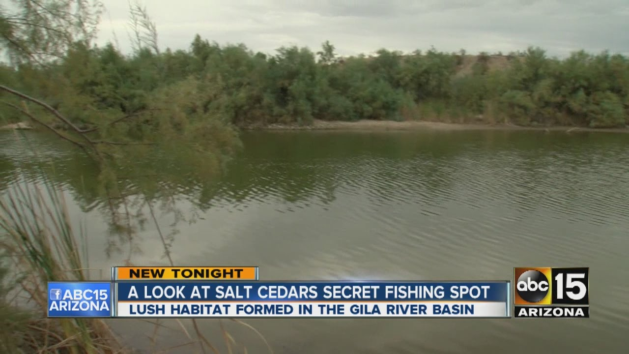 a look at salt cedars secret fishing spot near buckey