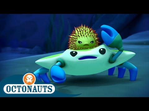 Octonauts - Squabbling Creatures   Cartoons for Kids   Underwater Sea Education