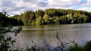 Россия. Красивейшее озеро. Очень красивая природа.  Уточки