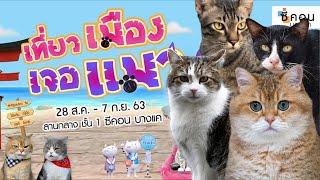 งานซีคอน: เที่ยวเมืองเจอแมว
