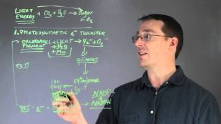 Conversion of Light Energy to Chemical Energy in Photosynthesis : Biology Lessons