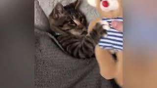 Котенок просит мягкую игрушку перед сном.