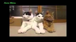 Приколы с животными, Видео приколы про животных youtube Приколы смотреть онлайн(, 2016-04-30T17:30:15.000Z)