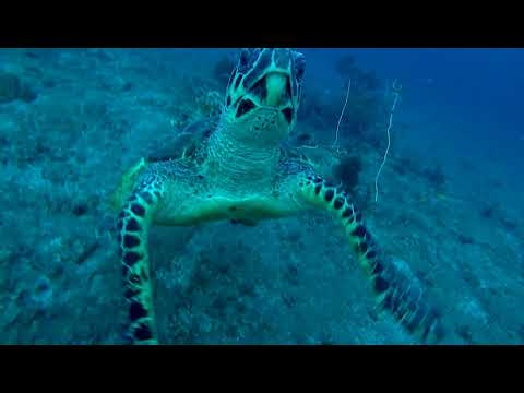 A surprise meeting with a sea turtle asking for help