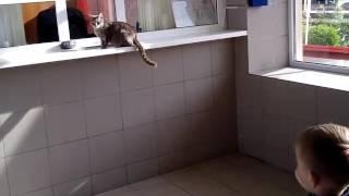 Кошка смешная очень смешно падает покупает билеты новинка