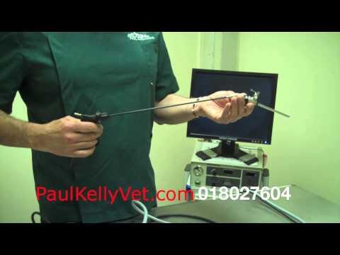 Laparoscopic Equipment Explained-Paul Kelly Veterinary Surgeon