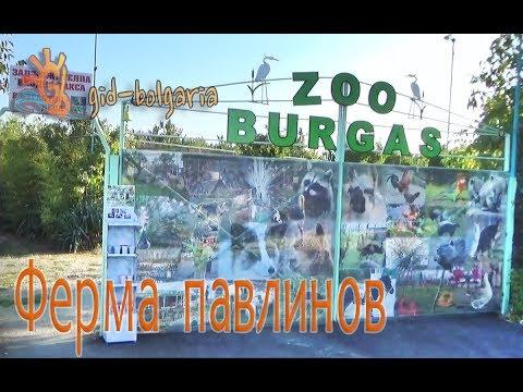 Ферма Павлинов - Бургас Болгария / Peacocks Farm Burgas Bulgaria Zoo Burgas