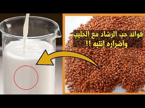 تعرف على فوائد حب الرشاد قبل اخذه حب الرشاد مع الحليب فوائد واضرار