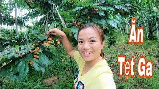 🇯🇵Ăn Cherry Tại Vườn Nhật Bản Cherry Nhiều Quá Càng Hái Càng Mê #250