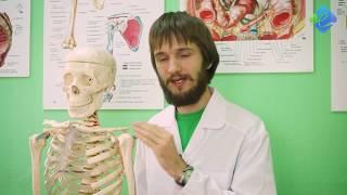 Курсы лечебной физкультуры в Институте массажа и косметологии
