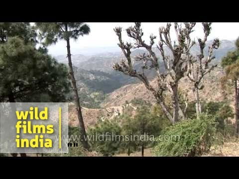 Shimla Hills : Perfect escape into Himachal