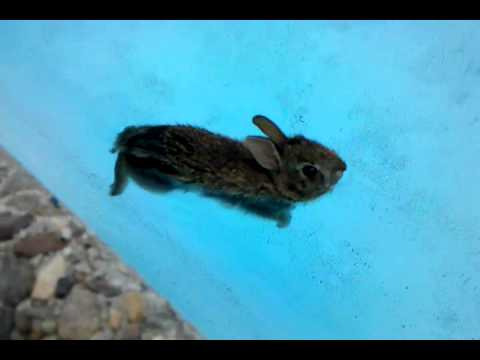 ferocious baby bunny out for a swim youtube
